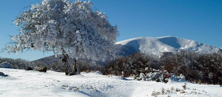 Selva de Irati en invierno