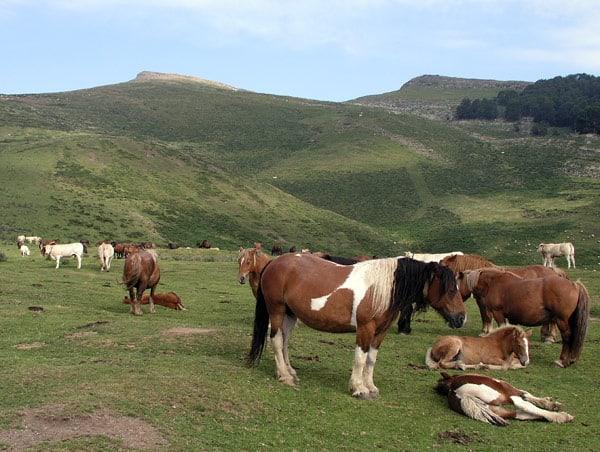 Ganado equino pastando bajo el monte Urkulu