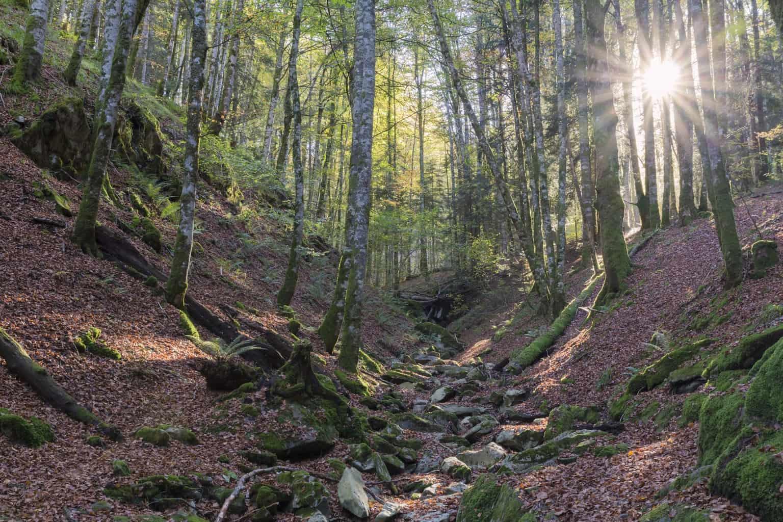Rutas Selva Irati
